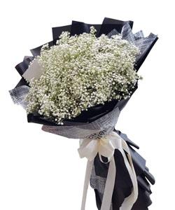 hoa bo k435