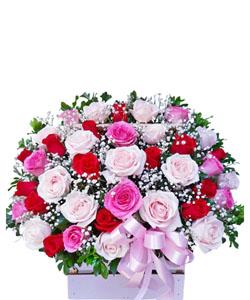 hoa sinh nhat k385
