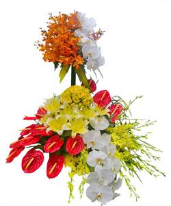 hoa sinh nhat k395