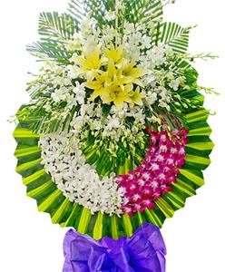 hoa tang le k271